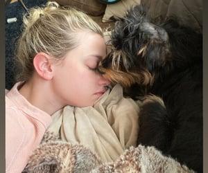 animals, pets, and wonderful image