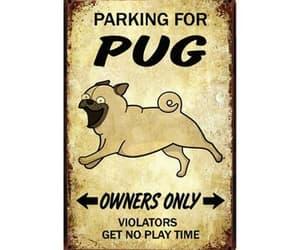 dog, pug, and doglover image