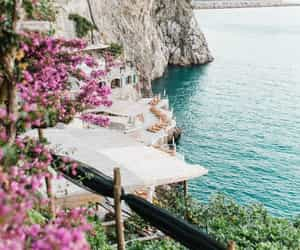 beach, flora, and flowers image