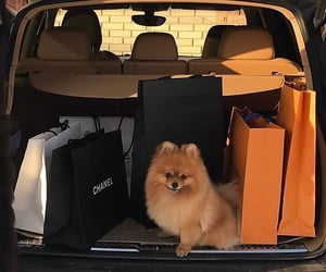 dogs, shop, and shopping image