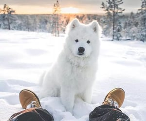 animal, forest, and snow image