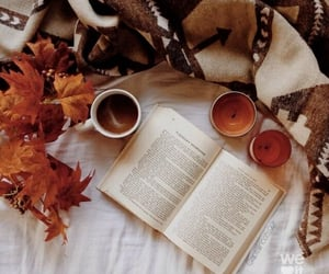 autumn, photography, and beauty image