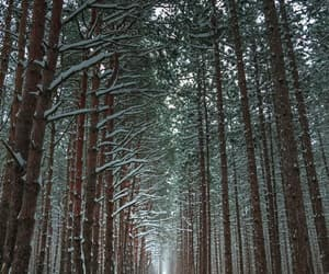 forest, patterns, and snow image