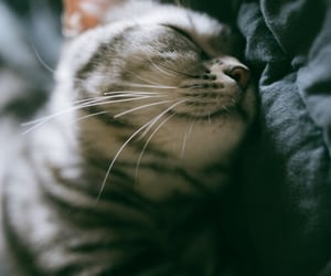 kitty, cute, and animals image