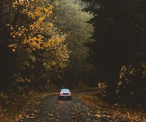 adventure, autumn, and forest image