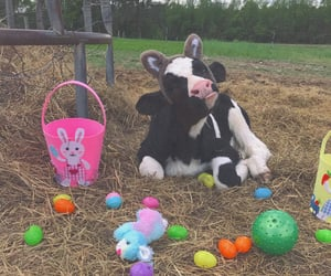 animal, cow, and easter image