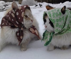 adorable, cat, and headscarf image