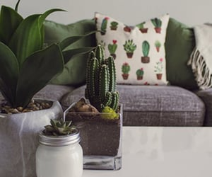 cactus, home decor, and plant image
