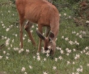 deer, soft, and cottagecore image