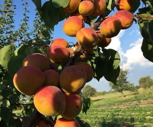 peach, soft, and call me by your name image