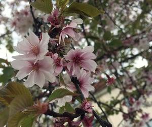 kwiaty, wiosna, and przyroda image