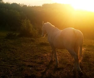 cheval, nature, and coucher de soleil image