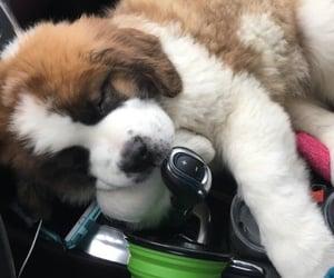 animals, car, and dog image