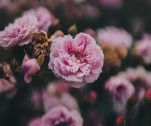 background, flores, and flower image