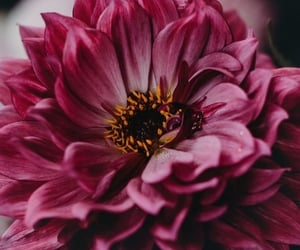background, flowers, and fresh image