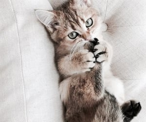 animals, yes, and kitten image