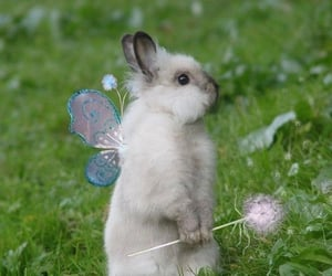 cute, bunny, and fairy image