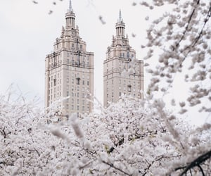 beautiful, flowers, and new york city image