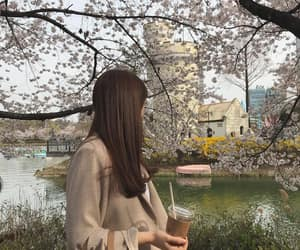 aesthetic, asia, and cherry blossom image
