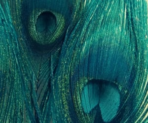 feathers, green, and peacock image