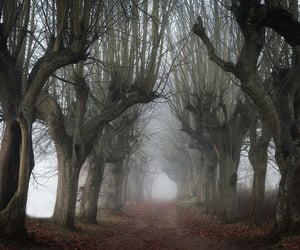 creepy, nature, and path image