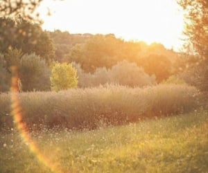 aesthetic, nature, and sunshine image