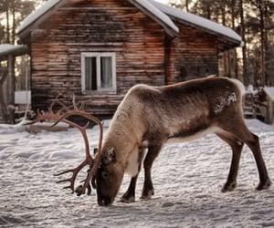 animal, cold, and hut image