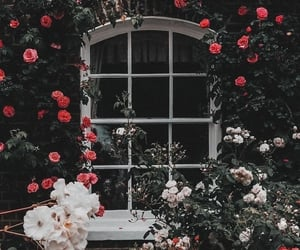 flowers, wallpaper, and spring image