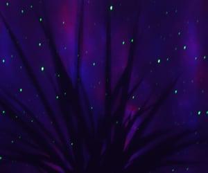 plant, purple, and stars image