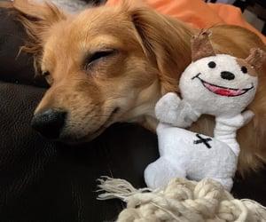 chihuahua, dachshund, and dog image