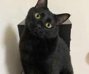 akira, cat, and instagram image