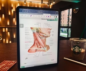 anatomy and med school image