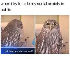 meme and anxiety image