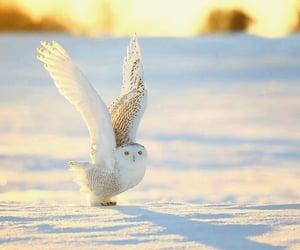 animals, bird, and dreamy image