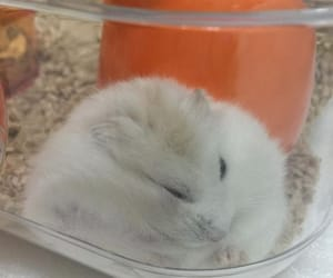 baby, fluffy, and sleepy image