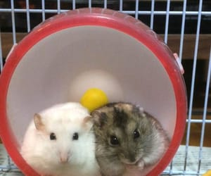 babies, couple, and hamsters image