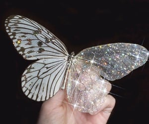 butterfly, aesthetic, and glitter image