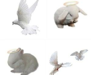 aesthetic, angel, and bunny image