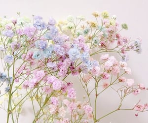 flower, lovely, and pretty image