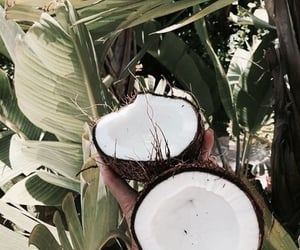 coconut, summer, and theme image