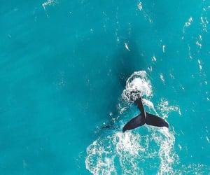 animal, blue, and free image