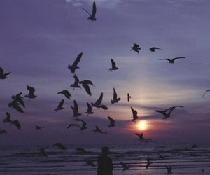 birds, sky, and nature image
