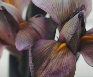 brown, flowers, and iris image
