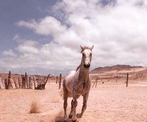 animals, atacama, and caballos image