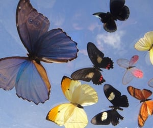 butterfly, aesthetic, and sky image