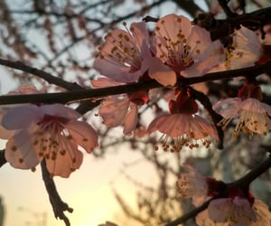 april, blossom, and evening image