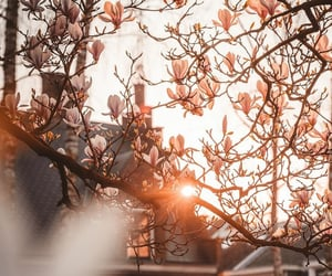 cherry blossoms, dawn, and europe image