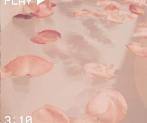 pink, rose, and asethetic image