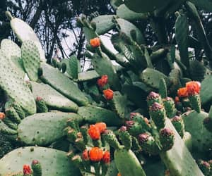 background, cacti, and flowers image