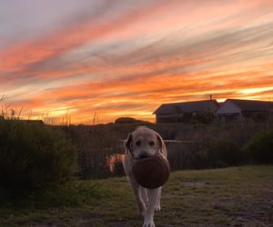 cape town, colour, and dog image